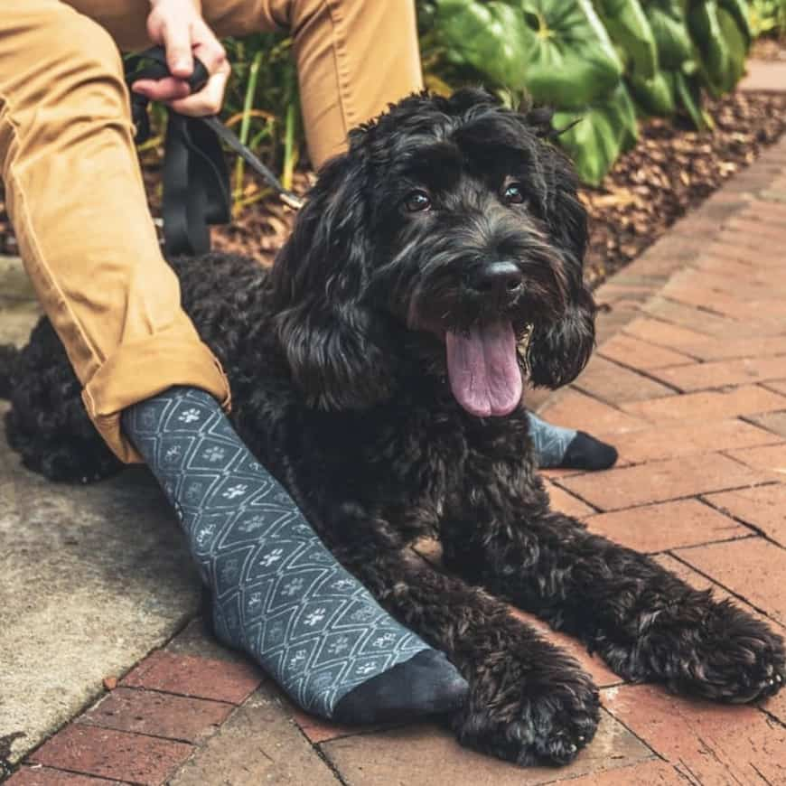 Socks That Save Dogs by Conscious Step