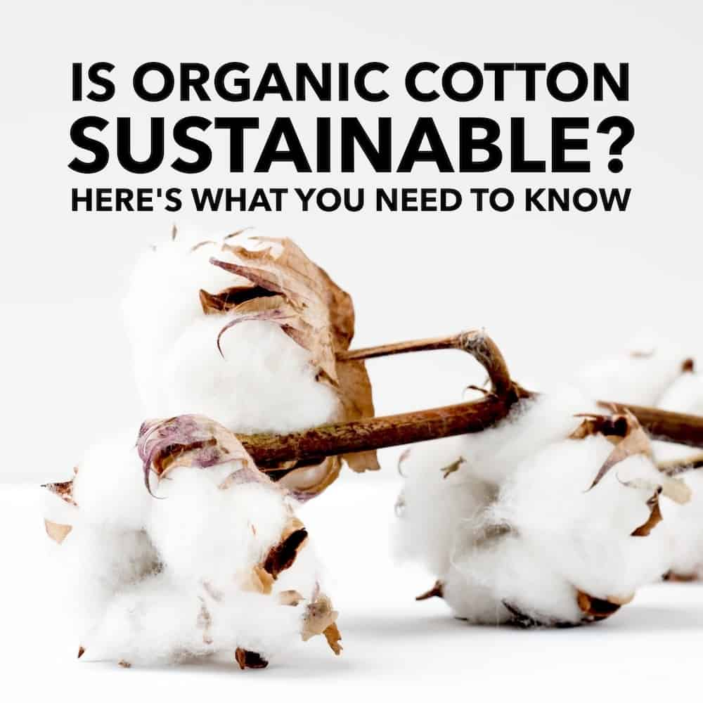 Is Organic Cotton Sustainable? Here's What You Need to Know