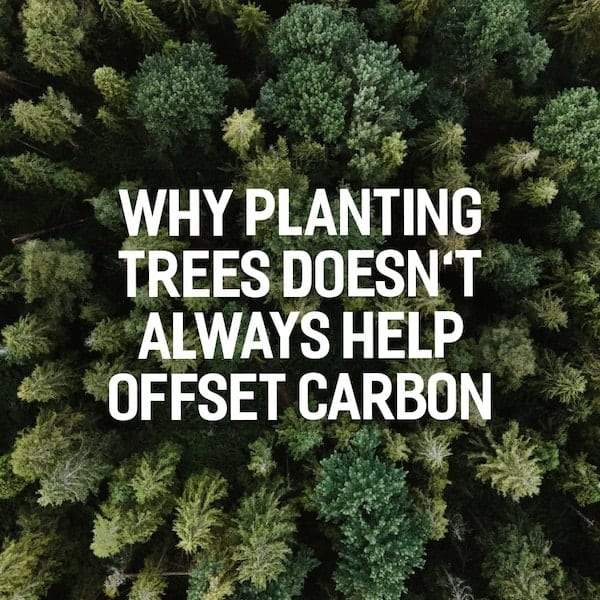 Why planting trees doesn't always help offset carbon